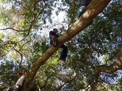 Azure Liminality Straddling Branch