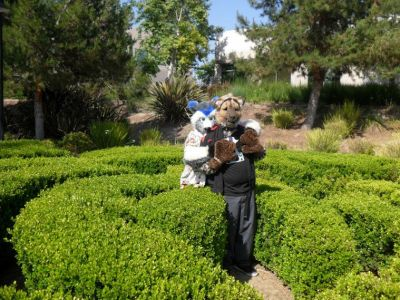 Coony and G Hyena in the Topiary Maze