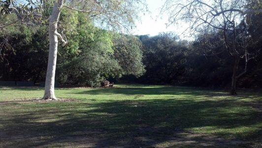 Snapshot of the open field area surrounding group area 3 in Irvine Regional Park