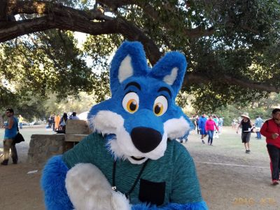 Blue fox fursuiter holding its tail