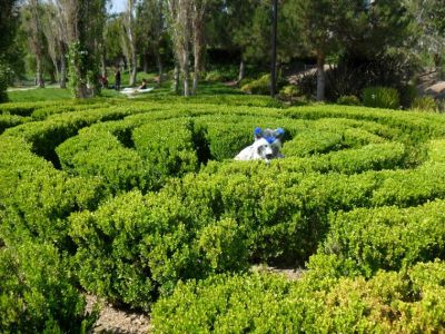 Coony crouched at the middle of the topiary maze. He is hiding