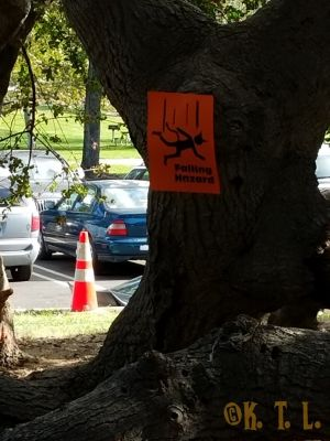 Tree in the park, with an orange sign taped to it