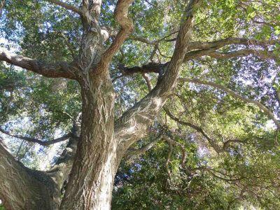 Trees Lostwolf321