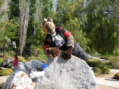 G Hyena On Rocks