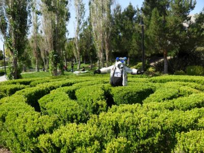 Coony standing in the middle of a topiary maze