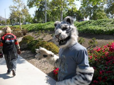 Fursuiters Walking Along the Path
