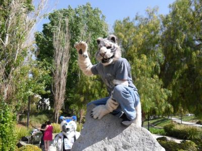 Goob Tiger crouched on a rock waving