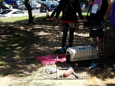 Puppy Pen parked under the shade at SoCal FurBQ